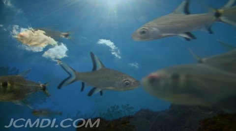 SkyFish 720p HD Time Lapse Clouds and Fish