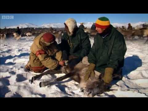 Reindeer rodeo - Last Man Standing - BBC