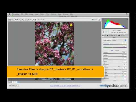 Photoshop tutorial: Preparing images for online viewing | lynda.com
