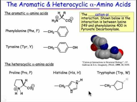 The Natural alpha-Amino Acids
