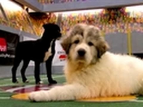 Puppy Bowl VII - Puppy Bowl VII Final Moments
