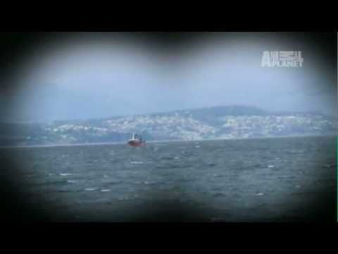 Whale Wars- Tailed by Mystery Boat