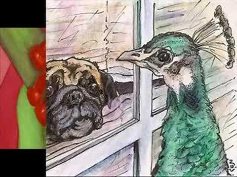 Pet Video Contest #6