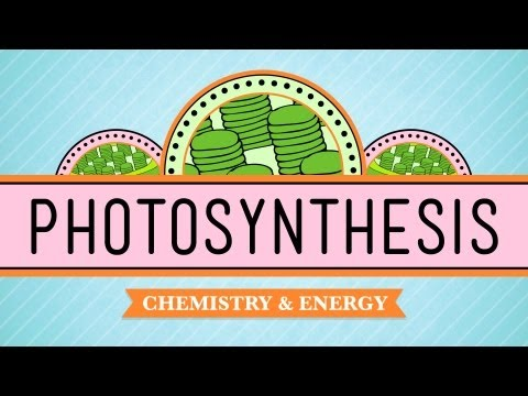 Photosynthesis: CrashCourse Biology #8