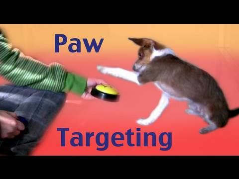 Paw Targeting - how to teach tricks dog training clicker training