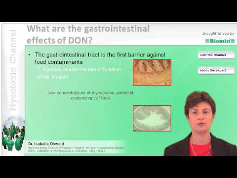 What are the gastrointestinal effects of DON?
