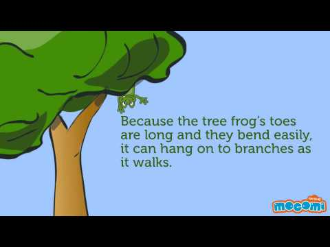 Why don't tree frogs fall?