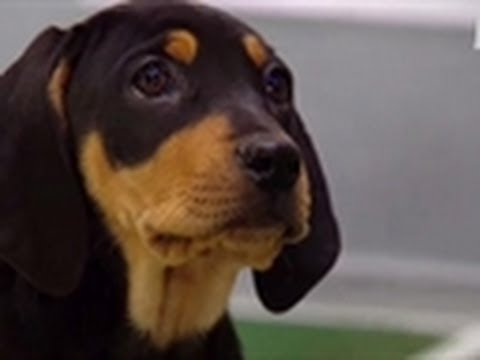 Puppy Bowl VII: Puppy Lockout Looms