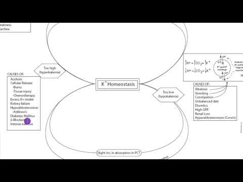 Potassium Homeostasis: Part 1
