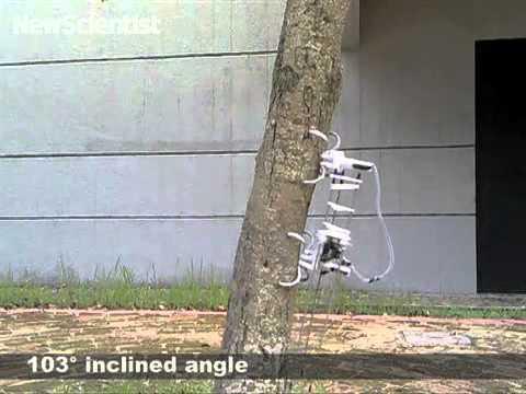 Tree-climbing robot