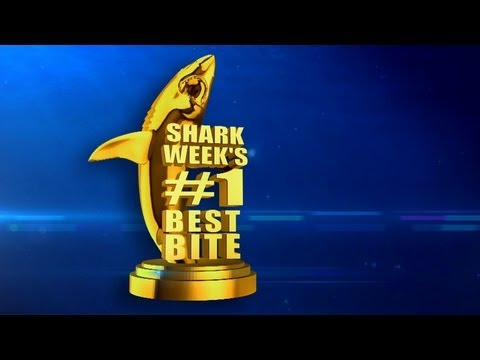 Shark Week's Greatest Shot | Shark Week's 25 Best Bites -- Shark Week 2012