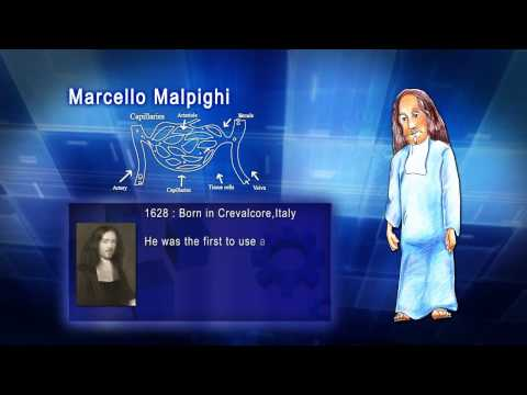Top 100 Greatest Scientist in History For Kids(Preschool) - MARCELLO MALPIGHI