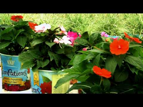 The Home Depot - Flower Power (episode 5) Raising Vigaro and Viva