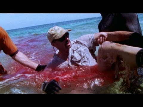 Shark Chomps Man's Leg | Shark Week's 25 Best Bites -- Shark Week 2012