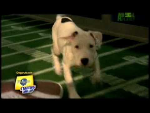 Puppy Bowl Classic - Meet the Puppy Players