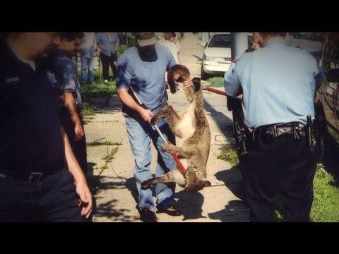 Wild Justice - Bear Problem