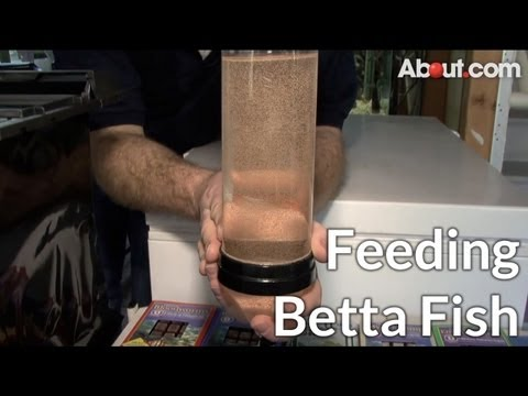Tips for Feeding Betta Fish