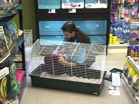 Setting Up a Guinea Pig Habitat