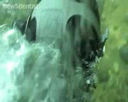 New Scientist video round-up - March 7, 2008