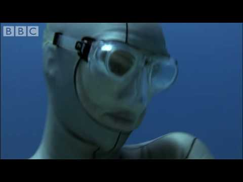 Swimming with wild reef sharks - Shark Therapy - BBC Animals