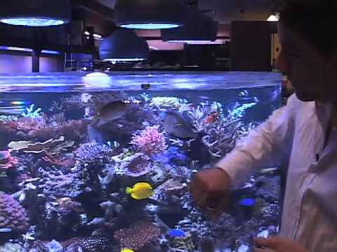 Tips for Choosing Saltwater Fish