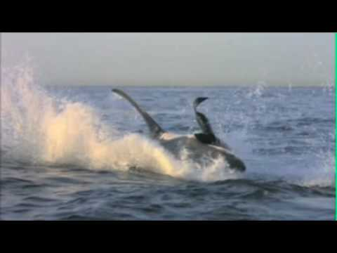 Shark Week 2010 - Heavy Lifting | Promo