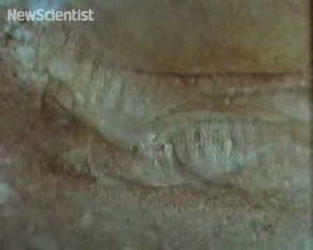 Oral sex gene helps male fish fake it