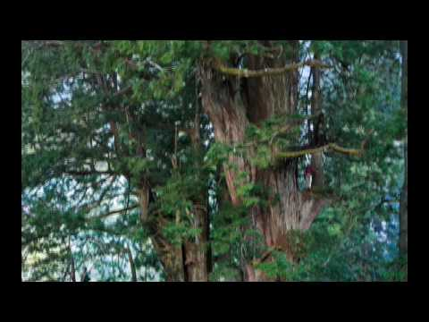 Redwoods: The Tallest Trees