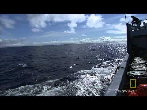 Shark Men - Chasing Giants