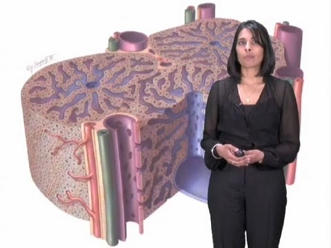 Sangeeta Bhatia Part 2: Microscale Liver Tissue Engineering