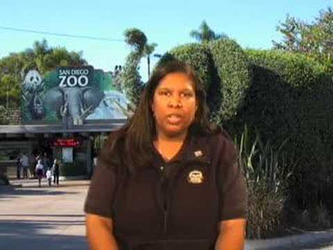 The San Diego Zoo at 90: Empress and Queenie