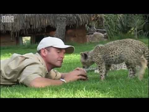 Teaching cheetah cubs to play & hunt - Cheetahs - BBC Earth