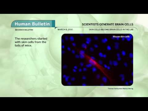 Science Bulletins: Scientists Generate Brain Cells