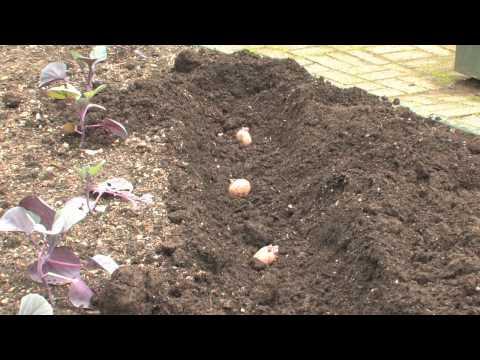 The Edible Garden — Planting Potatoes in Spring