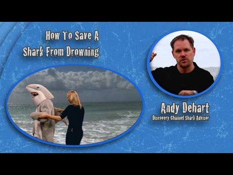 Shark Week 101: How To Save A Shark From Drowning