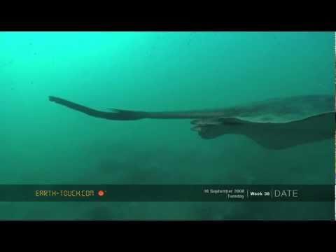 Reef animals: Eels, rays & big fish