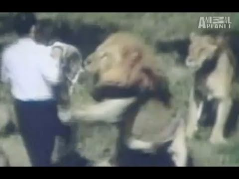 WTF: Lion Attacks Preacher