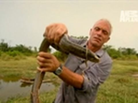 River Monsters- River of Freaky Fish