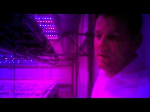 The World: Holland's Indoor Farming Experiment