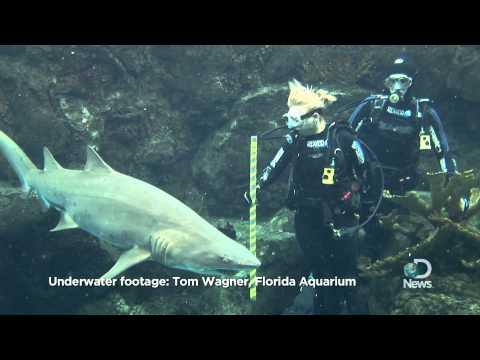 Shark Week 2011: Cool Jobs: Shark Traffic Cop