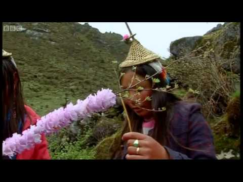 Two girls, one bunch of flowers - Tribe - BBC