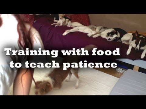 Teaching my dog to sleep using food-clicker dog training