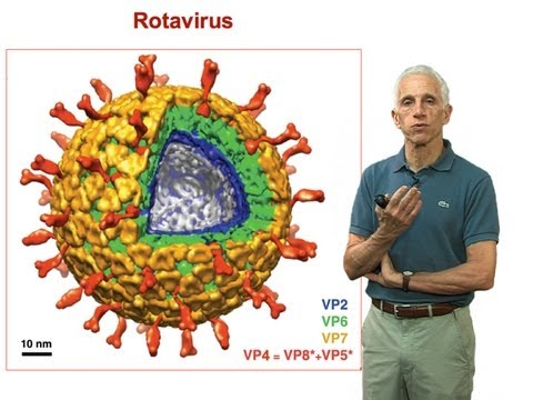 Stephen Harrison (Harvard) Part 3: Non-enveloped virus entry