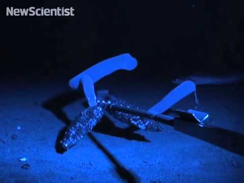 Slime secretions make hagfish hard to bite