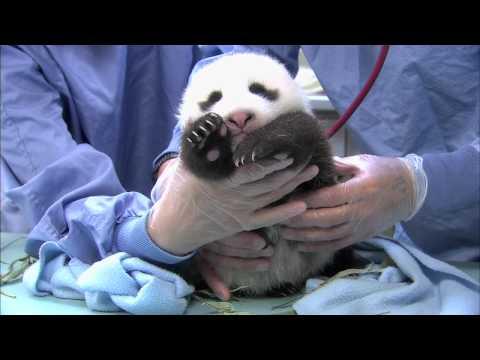 Panda Cub 6th Exam