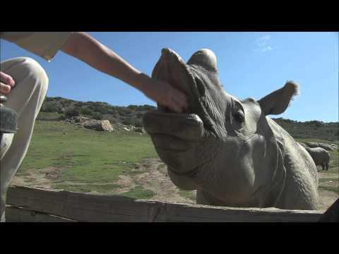 San Diego Zoo Kids - Rhinos