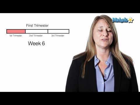 Pregnancy - Week 06