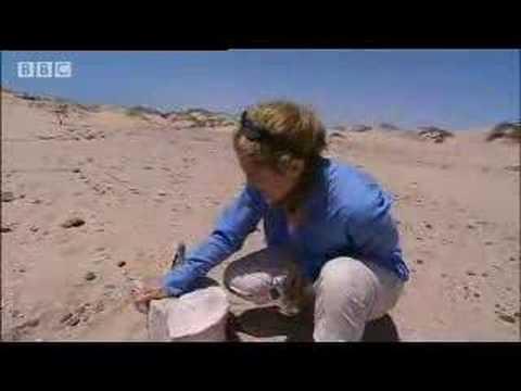 Secrets of the Skeleton Coast in Namibia, Africa - BBC wildlife