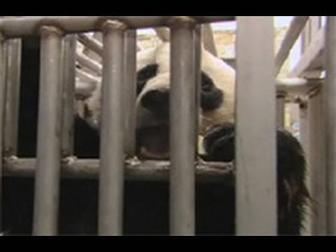 Zoo Vets: Working with Pandas