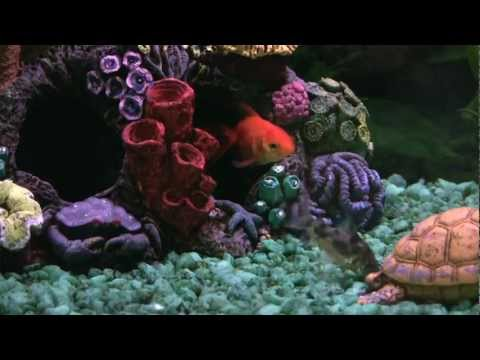 Selecting and caring for pet fish